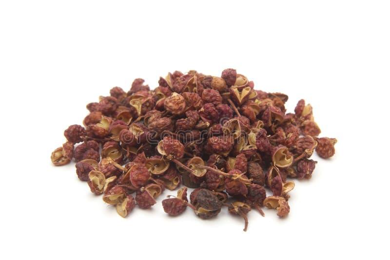Japanese pepper Zanthoxylum piperitum royalty free stock image