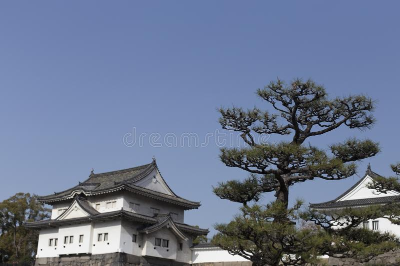 Japanese pine  inside the Wakayama Castle in Japan stock photos