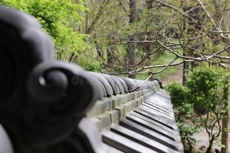 Japanese Pine-Mist Garden Wall stock image