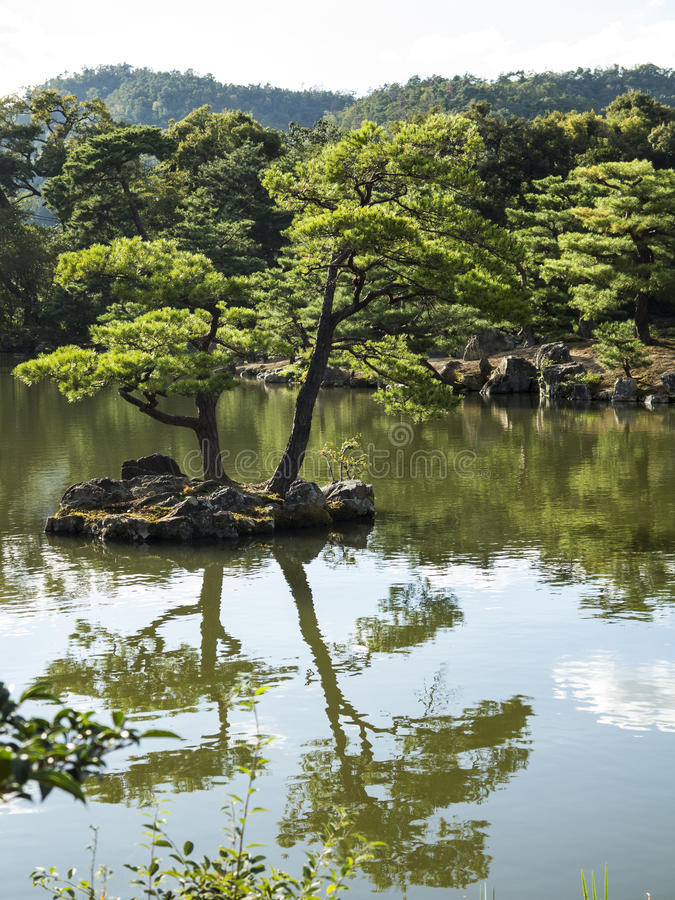 Japanese Pond With Pine Trees Royalty Free Stock Photos Image