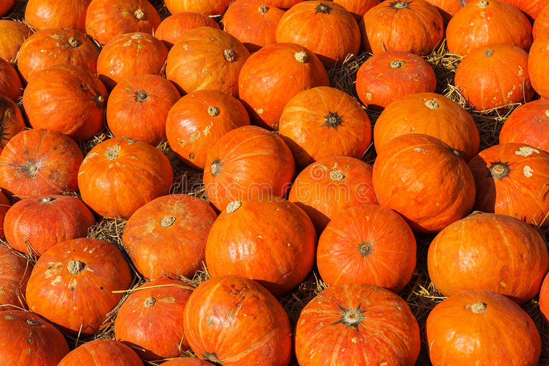 Japanese pumpkin royalty free stock image