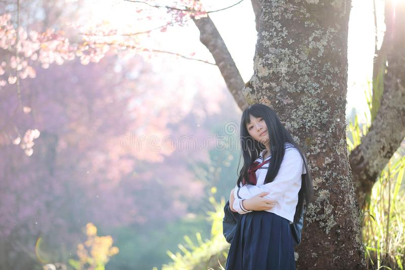Japanese school girl dress looking sakura flower nature walkway. Japanese school girl dress looking sakura flower nature view stock photography