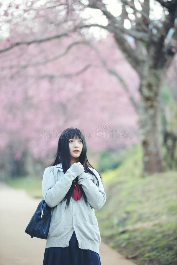 Japanese school girl dress with sakura flower nature. View royalty free stock images