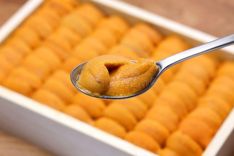 Japanese sea urchin. Sushi and sashimi ingredients royalty free stock photos
