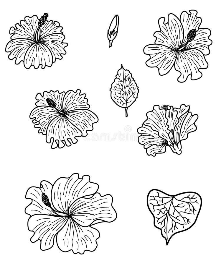 Japanese snake vector and illustration design on white background. stock illustration