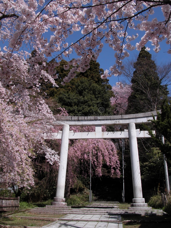 Download Japanese spring view stock photo. Image of flowers, flower - 704086