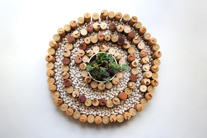 Japanese stone garden concept with wine corks, white kidney beans and succulents royalty free stock images