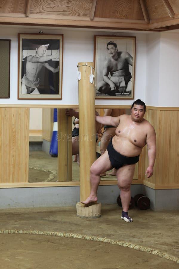 Japanese sumo at sumo training royalty free stock photo