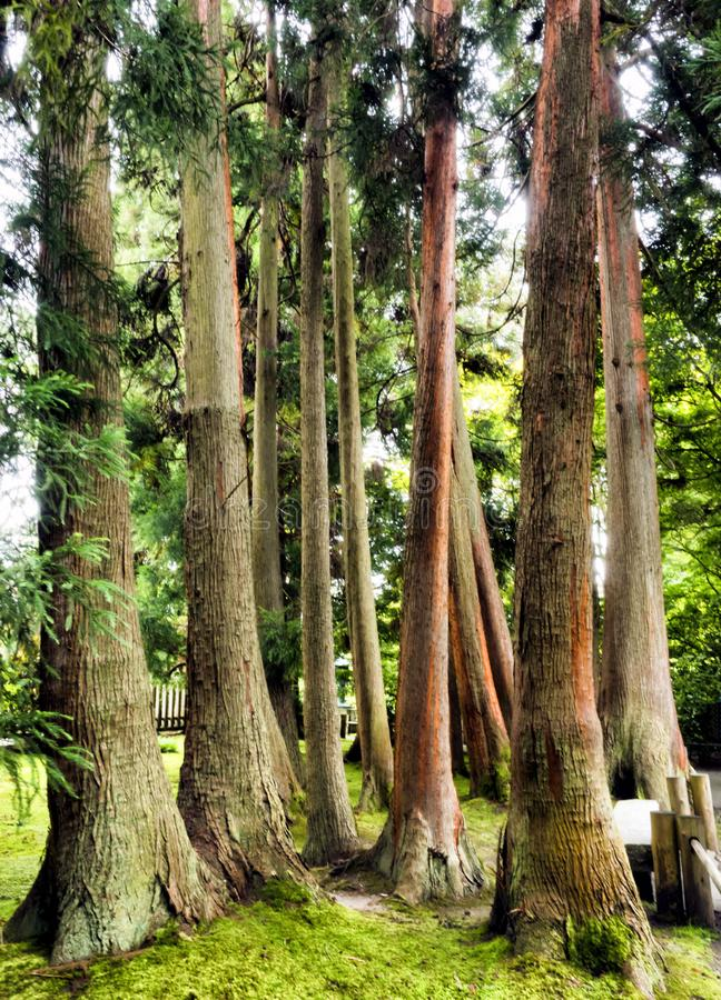 Japanese Tea Garden, Golden Gate Park, San Francisco, California, CA stock image