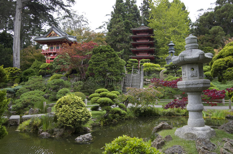 Japanese Tea Garden. In San Francisco is the oldest Japanese garden in the USA. It is great Japanese garden elements, such as tower, lantern, pond and pine stock photography