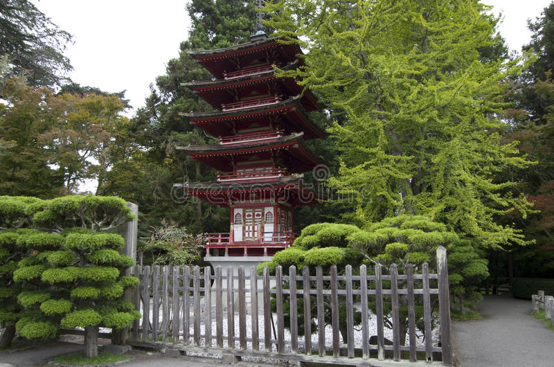 Japanese Tea Garden. In San Francisco is the oldest Japanese garden in the USA. It is great Japanese garden elements, such as tower, lantern, pond and pine royalty free stock photography