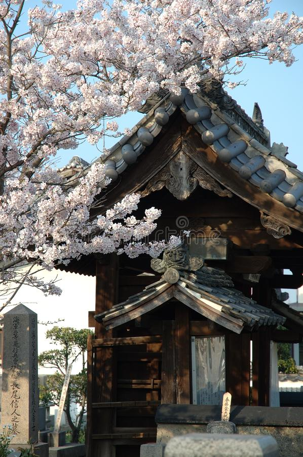 Japanese temple and cherry blossoms stock photography