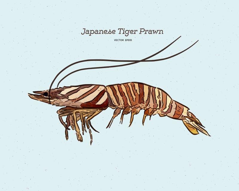 Japanese tiger prawn, hand draw sketch vector 皇族释放例证