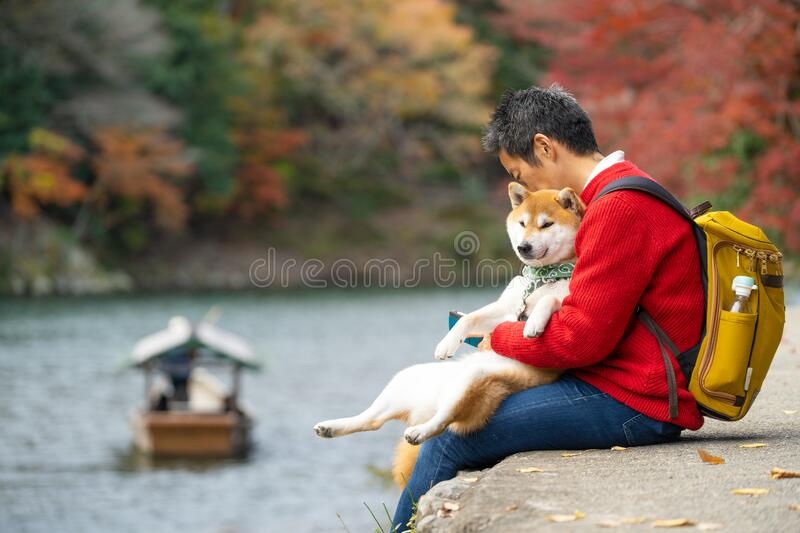 Japanese tourists sit and relax along the arashiyama river during the autumn leaves. With the shiba dog. Japanese man and his buddy shiba dog sit resting along stock photos