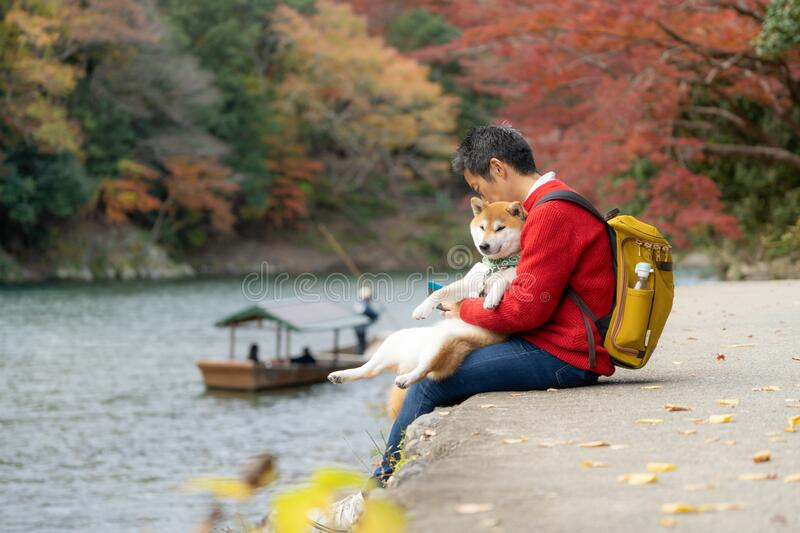Japanese tourists sit and relax along the arashiyama river during the autumn leaves. With the shiba dog. Japanese man and his buddy shiba dog sit resting along stock photography