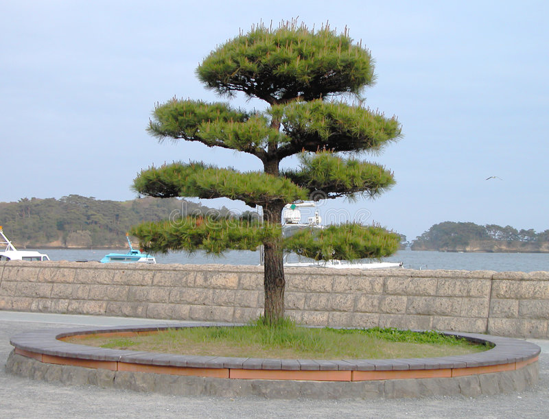 Download Japanese tree stock image. Image of outdoor, ocean, japanese - 87203