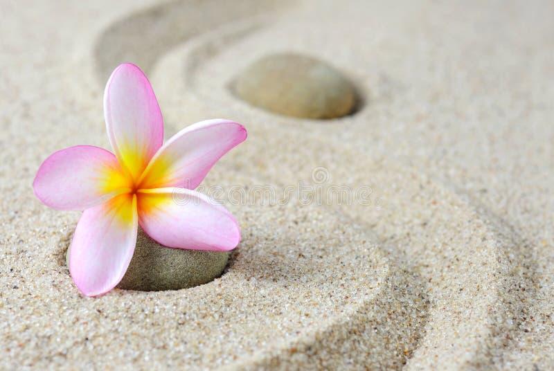 Japanese zen garden meditation stones and frangipani stock photos