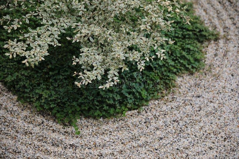 Japanese zen stones garden with space background stock image