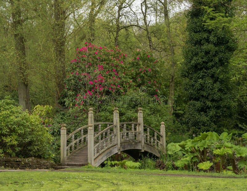 Japanische Art-Brücke im englischen Garten lizenzfreie stockbilder