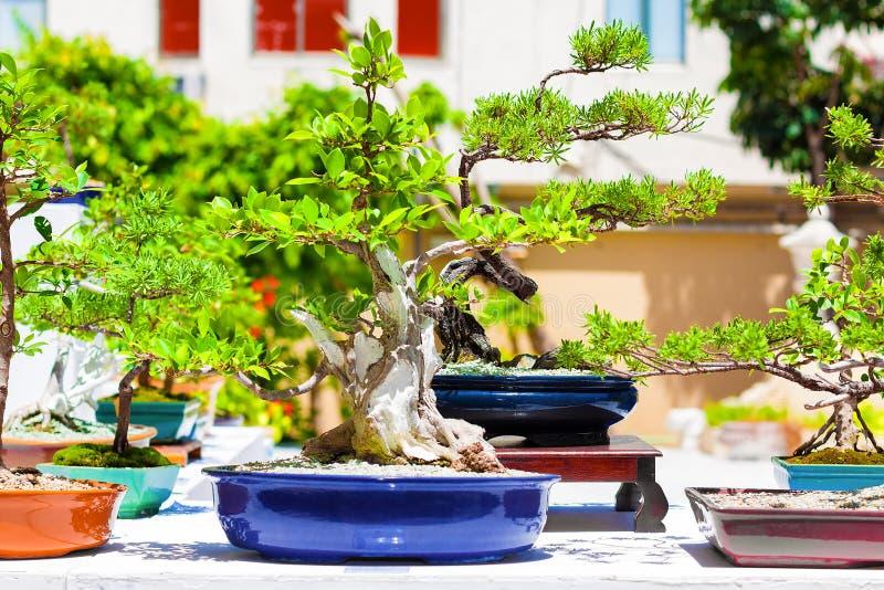 Download Japanische Bonsaisbäume stockbild. Bild von flora, chinesisch - 26361963