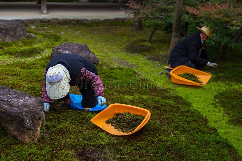 Japanische Gärtner arbeiten in einem Garten von Kenninji-Tempel lizenzfreie stockfotografie
