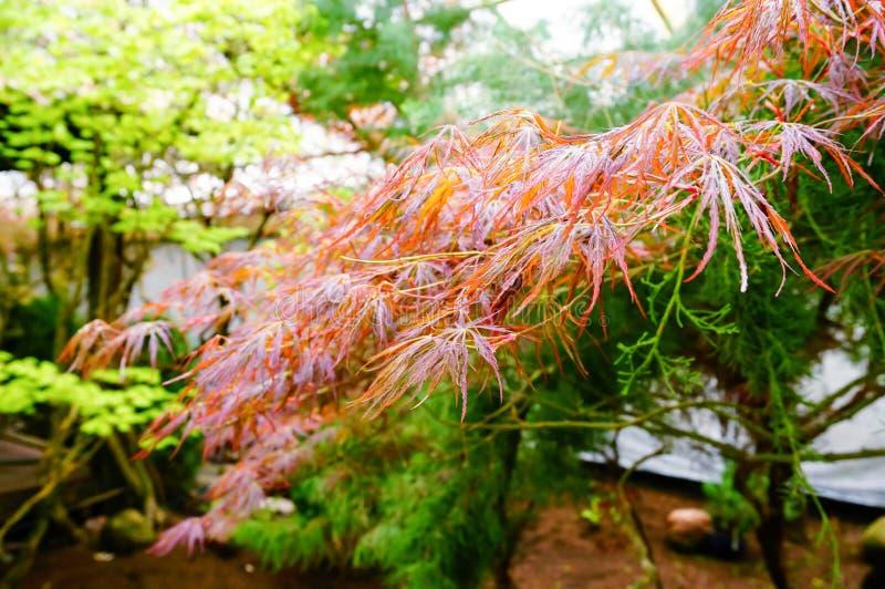 Download Japanische Gartendekoration Stockbild   Bild Von Farbe,  Nahaufnahme: 73973203