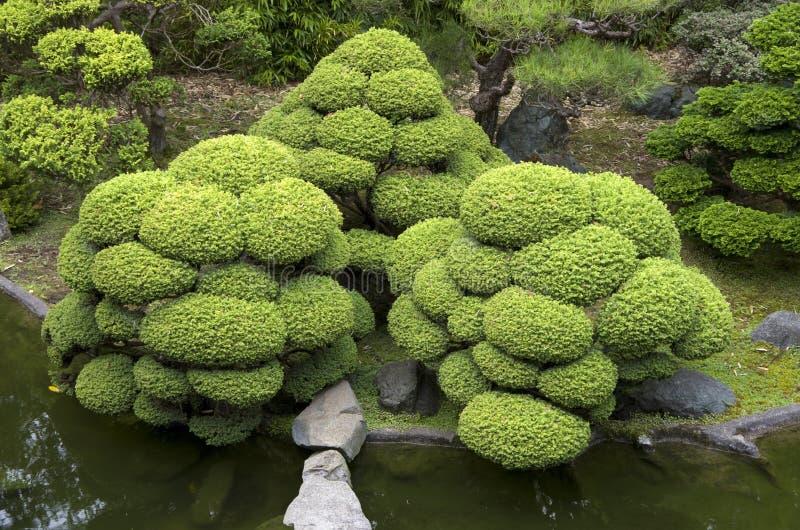 japanische gartenpflanzen stockfoto bild von haus auslegung 76592516. Black Bedroom Furniture Sets. Home Design Ideas