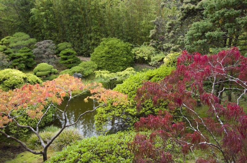japanische gartenpflanzen stockbild bild von bunt kultur. Black Bedroom Furniture Sets. Home Design Ideas
