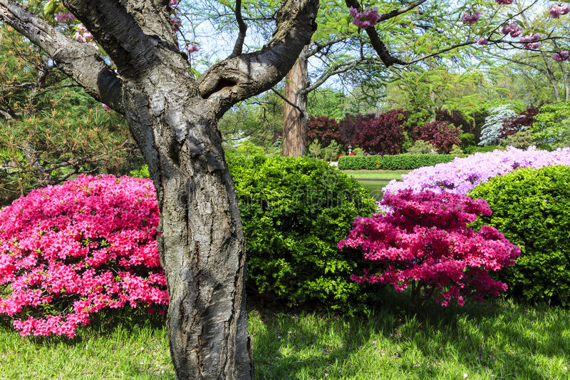 Japanische Gartenszene lizenzfreie stockfotografie