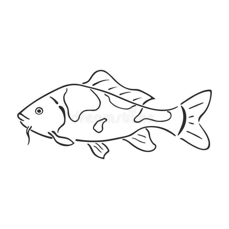 Japanische Karpfen koi Charakterzusammenfassungstintenhandgezogene Vektor-Logokarikatur Retro- Abbildung Frischwasserfluß und Tei lizenzfreie abbildung
