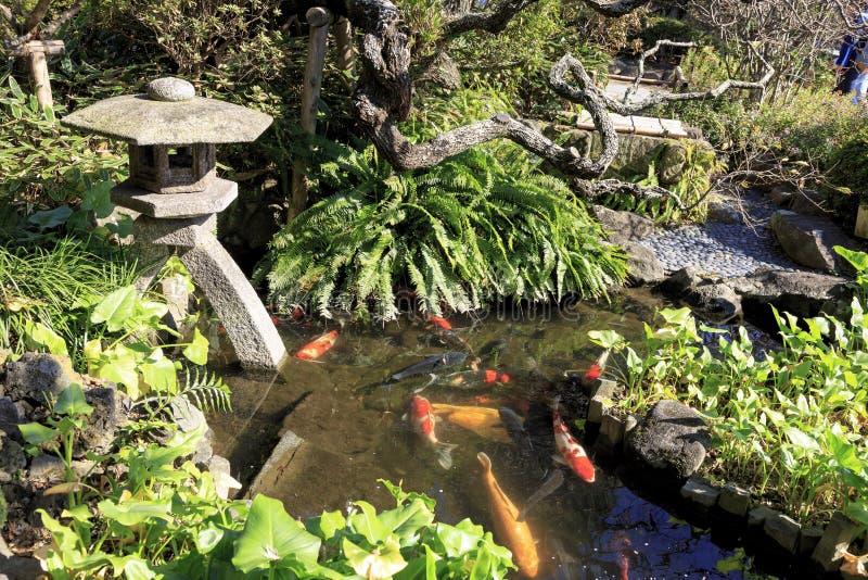 Japanische Karpfen und Laterne in einem Teich in Kamakura Japan lizenzfreie stockbilder