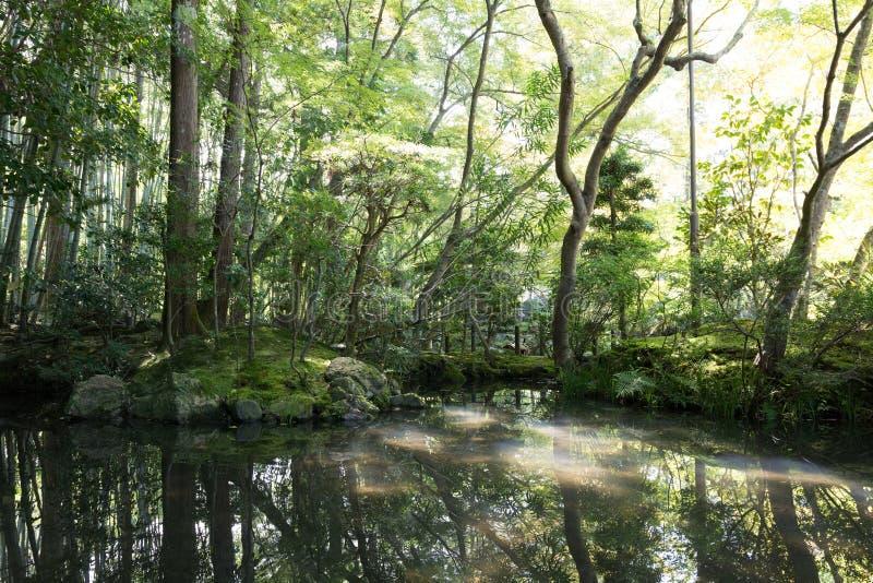 Japanische orientalische grüne Gartenansicht und -teich stockbild