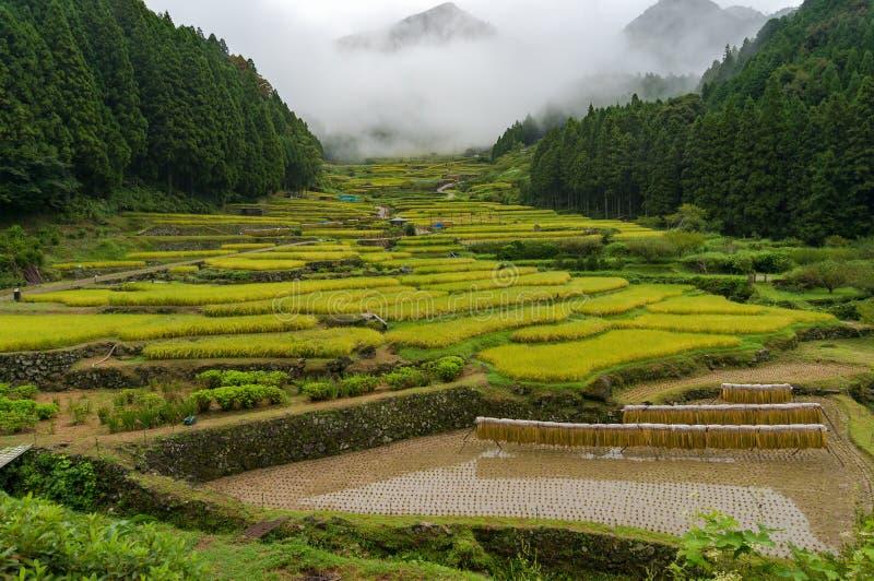 Japanische traditionelle Landwirtschaftslandschaft des Terrassenreispaddys stockfotos