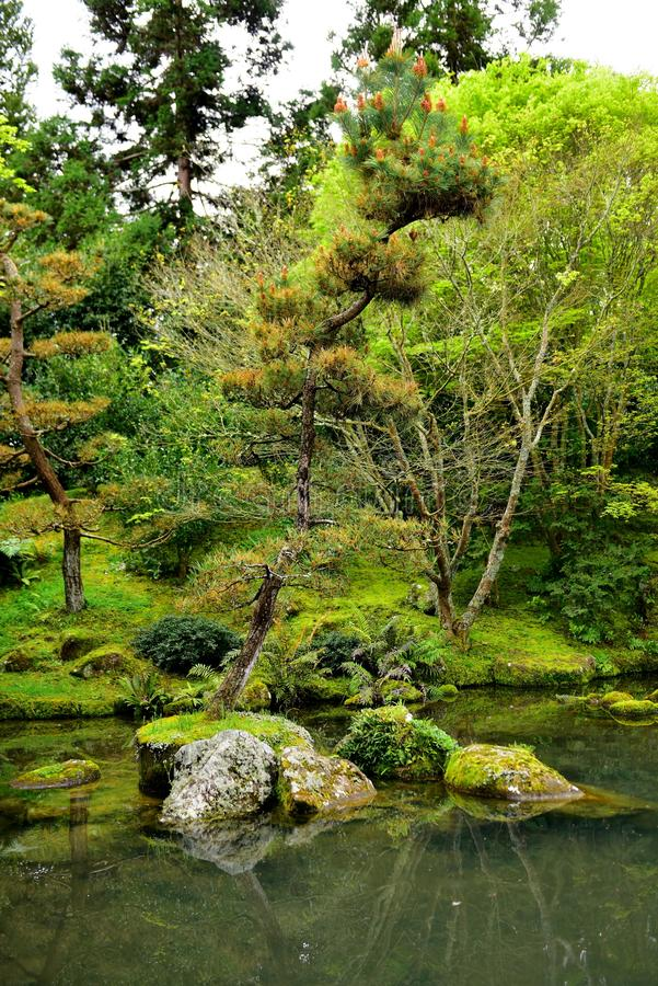 Japanischer Garten der Betrachtung in Hamilton Gardens stockbilder