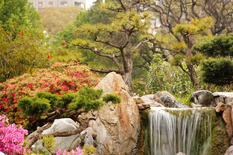 Japanischer Garten, sein kleiner Wasserfall und seine Blumen lizenzfreies stockfoto