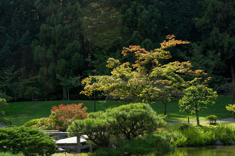 Japanischer Garten in Washington Park Arboretum, Seattle, Washington stockbild