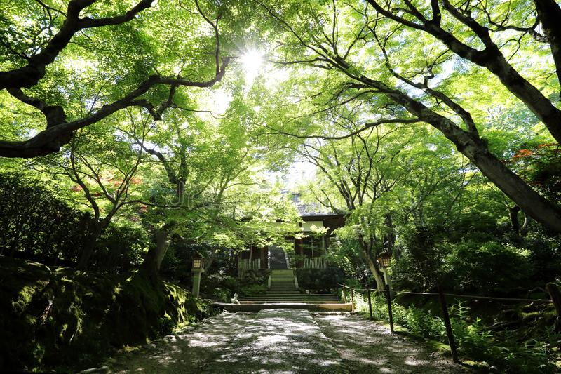 Japanischer Gehweg in den grünen Gartenbäumen lizenzfreies stockbild