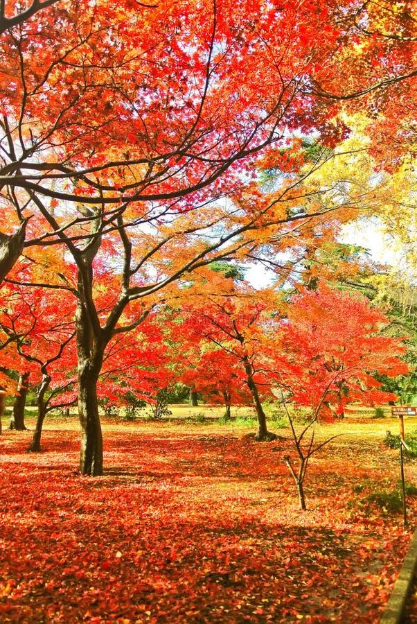Japanischer Park im Herbst in Tokyo, Japan lizenzfreies stockbild