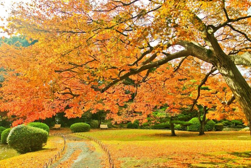 Japanischer Park im Herbst in Tokyo, Japan lizenzfreie stockfotos