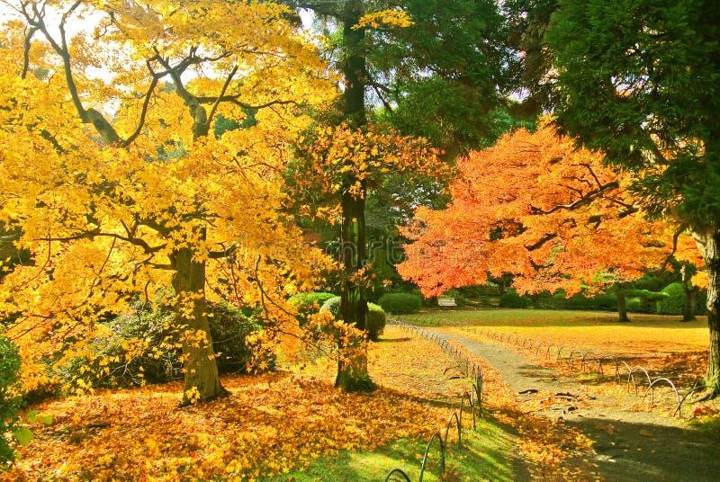 Japanischer Park im Herbst in Tokyo, Japan lizenzfreie stockfotografie