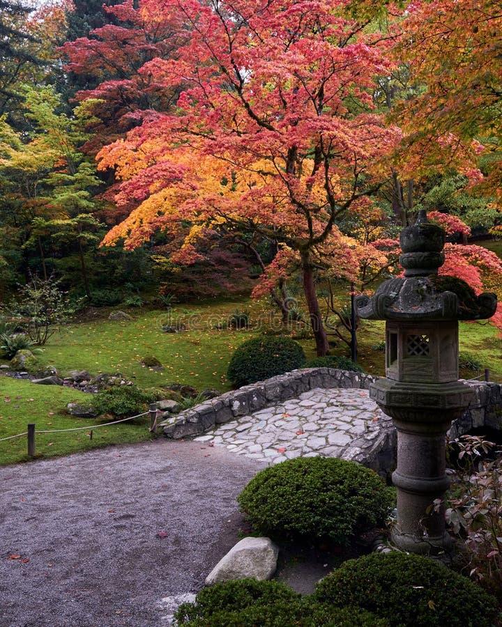 Japanischer Rotahornbaum während des Falles in einen japanischen Garten lizenzfreie stockfotografie