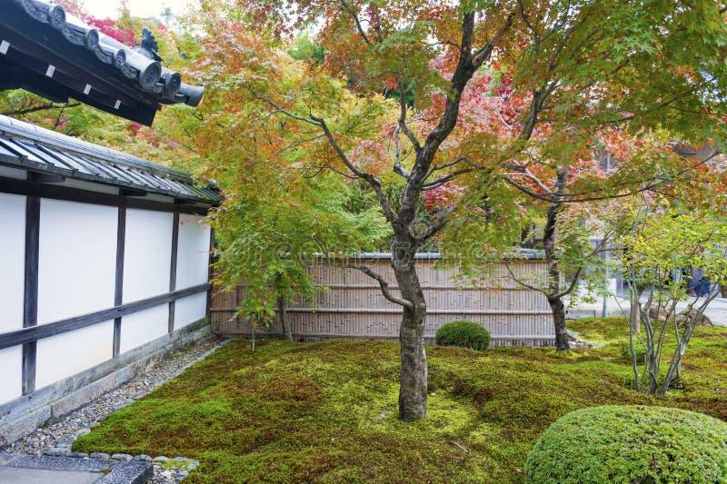 Japanischer Rotahornbaum während des Herbstes im Garten an Enkoji-Tempel in Kyoto, Japan lizenzfreies stockfoto