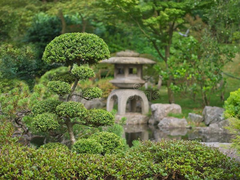 Japanischer Zengarten mit Bonsais und traditioneller Steinlaterne stockfotos