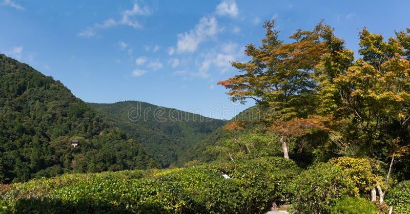 Japanisches Gartenlandschaftspanorama stockbild