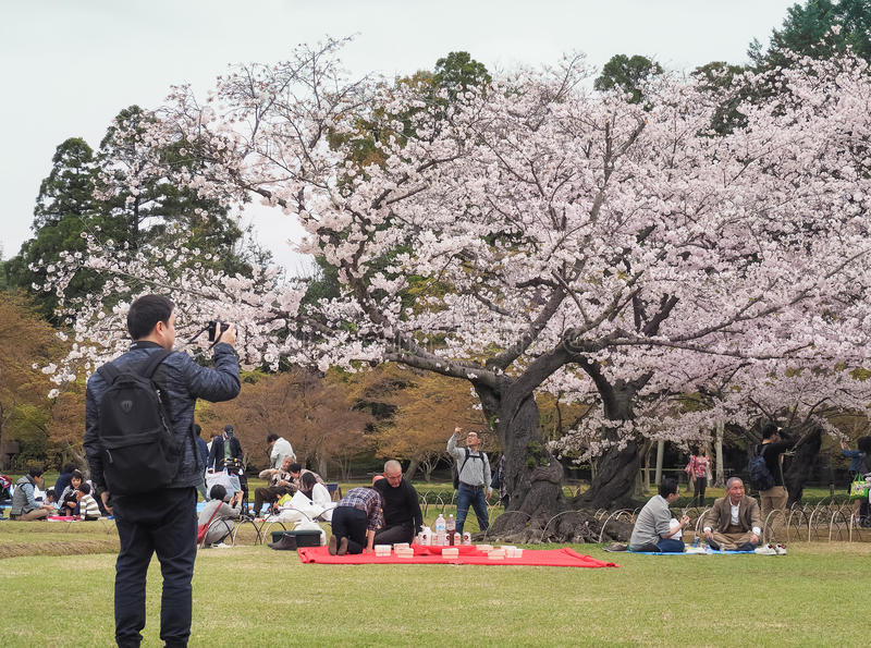 Japanisches genießendes Kirschblütenfestival korakuen herein Garten lizenzfreie stockfotos