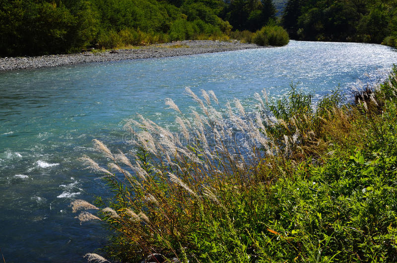 Japanisches silbernes Gras und Fluss, im Hochland Japan lizenzfreie stockfotografie