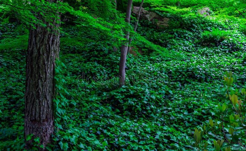 Japans Forest Incline stock foto
