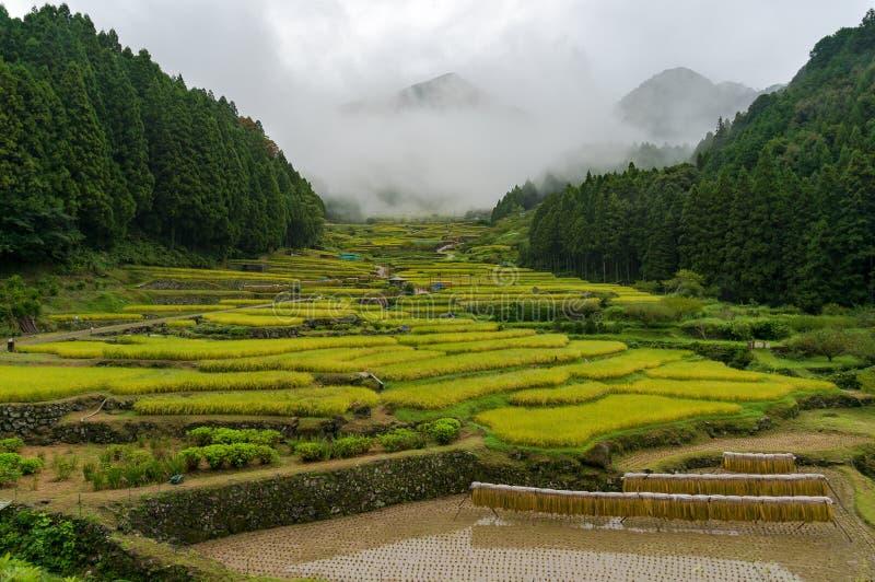 Japans traditioneel plattelandslandschap van terraspadieveld stock foto