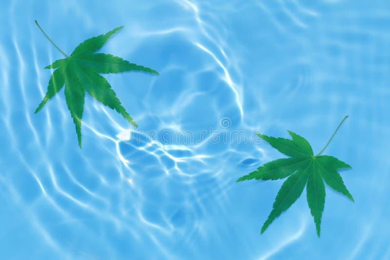 Japans vers groen esdoornblad op de blauwe achtergrond van de watergolf royalty-vrije stock foto's