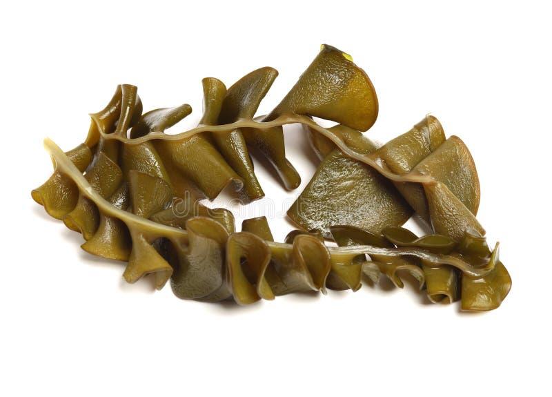 Japans zeewier, mekabu, wakame wortel royalty-vrije stock foto